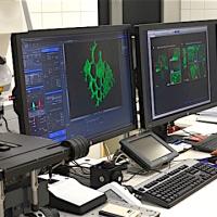 CLIL hodina biológie na lekárskej fakulte